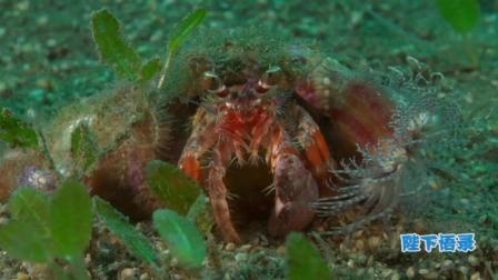 讲述一个你不知道的深海, 海洋传奇7