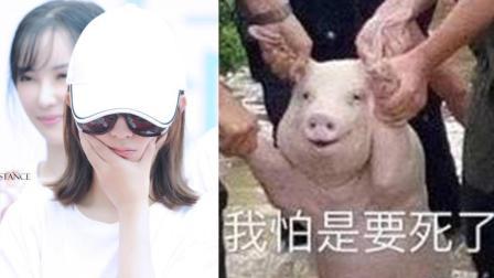 赵丽颖牙疼晒捂脸照 揪耳朵猪表情包传神