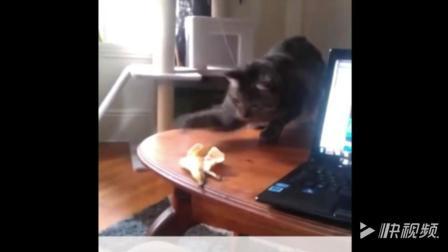 动物搞笑短片合集1