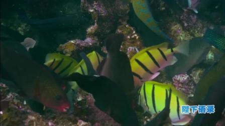 讲述一个你不知道的深海, 海洋传奇13