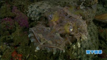 讲述一个你不知道的深海, 海洋传奇16
