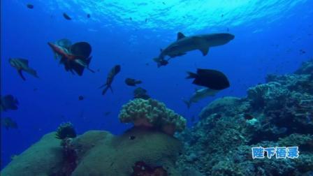 讲述一个你不知道的深海, 海洋传奇18
