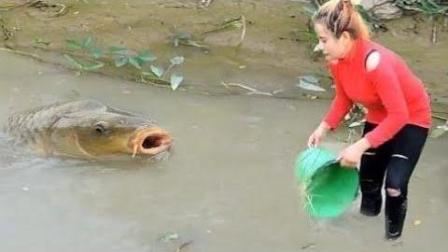 在柬埔寨, 到处见美女在水田摸鱼, 原因却是这样!
