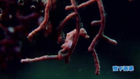 讲述一个你不知道的深海, 海洋传奇22