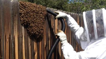 男子用吸尘器对付巨型马蜂窝, 马蜂当时就懵逼了!