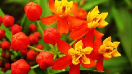 农村常见有毒植物 看看你认识几种