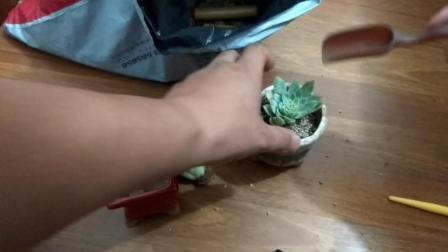 紫罗兰的养殖方法和注意事项 多肉植物图片及名称