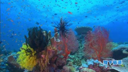 讲述一个你不知道的深海, 海洋传奇5