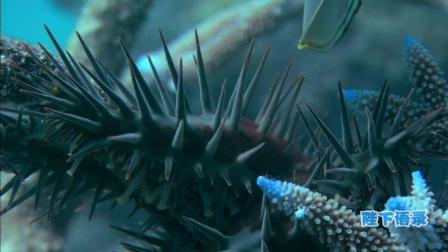 讲述一个你不知道的深海, 海洋传奇24