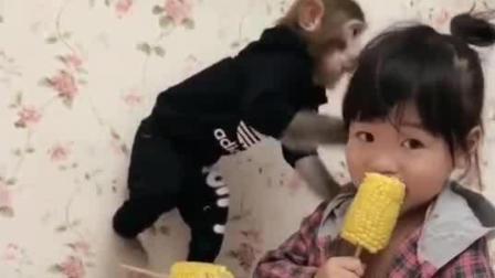 这家一看就是土豪, 看猴子的穿着就知道了, 一身衣服都一千多