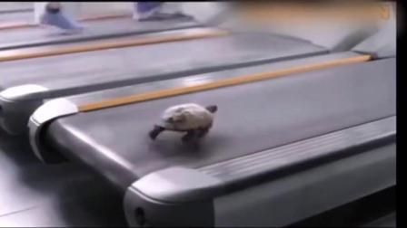 将乌龟放上跑步机, 速度简直就是开挂