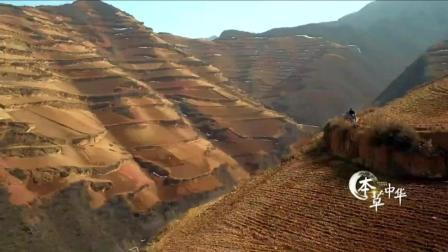 神奇的中国大陆-本草中国