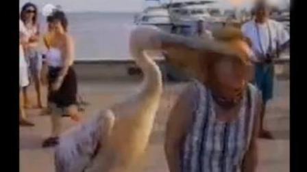 被小动物袭击的搞笑视频, 哈哈, 笑死我了