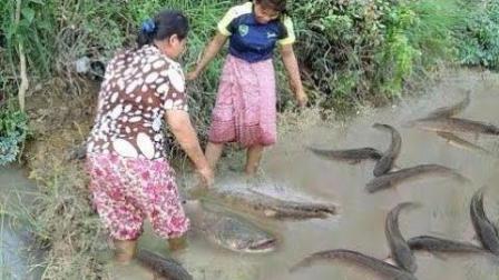 柬埔寨妈妈带女儿这样摸鱼, 舀干水, 这样徒手摸鱼才有乐趣!