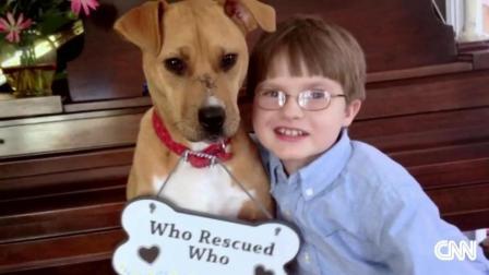 懂事的狗狗陪着唐氏症宝宝一起长大 有时候狗真的比人讲感情