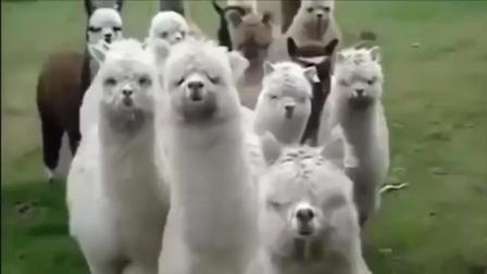一些搞笑的动物, 让你笑的合不拢嘴