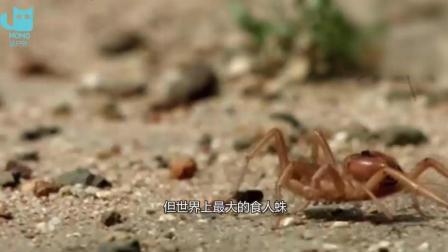 世界上最恐怖的动物, 体型非常小, 竟然能吃掉一整个人!