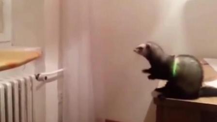 有趣的动物跳跃失败- 最好的搞笑动物