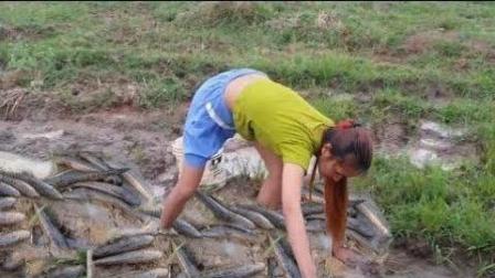 柬埔寨农家妹子, 捉鱼高手!