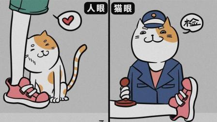 看不懂猫咪在干什么? 因为你和主子的想法根本不一样!