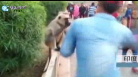 印度男子喂食猴子后 狂甩其一耳光