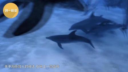 感动: 一段海豚救狗的视频, 旁边的鲨鱼气坏了