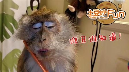 #土豆炒Fun #连宠物都化妆了, 你还好意思素面朝天嘛! ! !