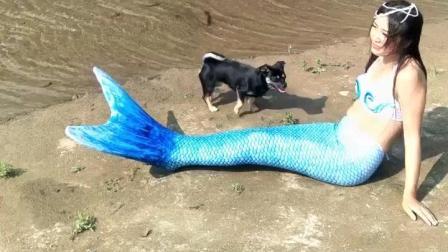 美人鱼是要被狗吃了吗?