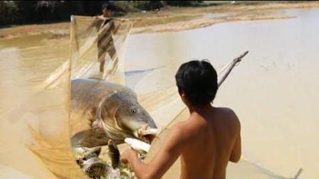 不得了! 三哥这么大阵仗拉网捕鱼, 鱼和虾捡不完的节奏