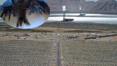 美国太阳能发电站成飞鸟坟墓, 2分钟烧死一只鸟!
