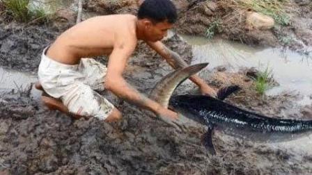 农村小哥这样抓鱼真过隐, 你有过这样的抓鱼经历吗?