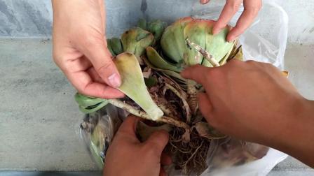 玉蝶多肉植物多久浇一次水 多肉品种图片及名称
