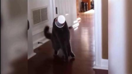 搞笑: 国外动物成精了? 搞笑作死视频集锦!