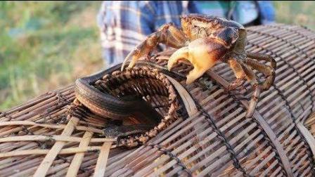 柬埔寨小伙子野外捕鱼, 鱼笼提起来那一瞬间, 兴奋极了!