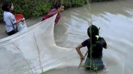 农村三姐妹小溪拉网捕鱼, 竟收获这么多, 路过的村民都红了眼!