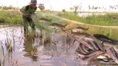 柬埔寨小哥为改善伙食, 池塘超大鱼网捕鱼, 收网时, 场面火了