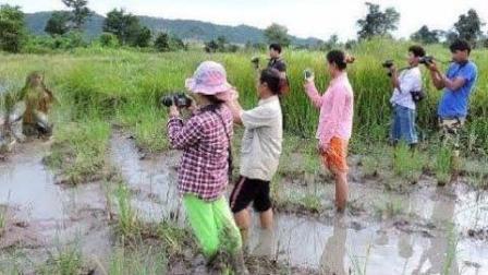 实拍大揭秘: 柬埔寨姑娘原来是这样抓鱼, 那么多人拍, 脸都红了!