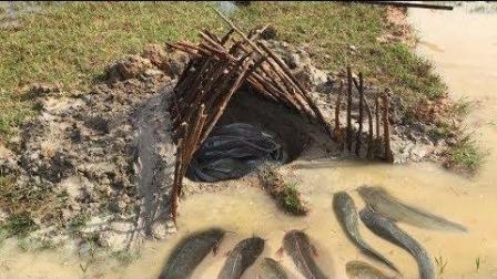 大叔在河边自制一个简单的捕鱼陷阱, 竟捕到好多鱼!
