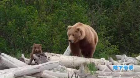 新版熊出没, 熊大熊二原型真实版大起底告诉你一个不一样的熊孩子! 8