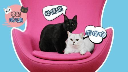 猫咪求关注的3种表现! 学会了再去吸猫吧