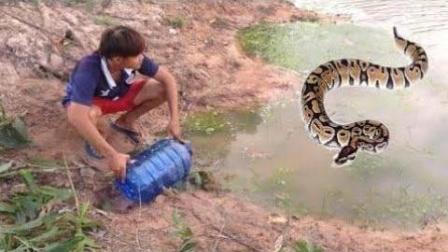 一个不起眼的陷阱, 用青蛙当诱饵, 结果收获了很多水蛇