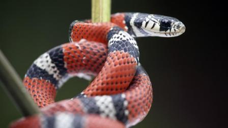 《人蛇大战》蛇王召集十万蛇子蛇孙屠杀人类只为复仇