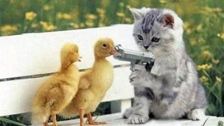 爆红猫 网上最火猫 搞笑视频笑死人