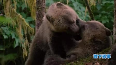 新版熊出没, 熊大熊二原型真实版大起底告诉你一个不一样的熊孩子! 14