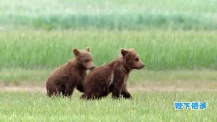 新版熊出没, 熊大熊二原型真实版大起底告诉你一个不一样的熊孩子! 7