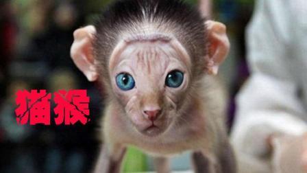 杂交猫猴 到底是娇小可爱还是诡异骇人?
