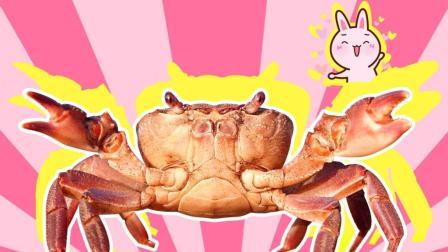 农村美女教你挑出肥美螃蟹的小诀窍, 果然高手在民间啊!
