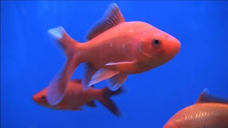 鱼不会闭眼睛, 是怎么睡觉的? 又涨知识了!