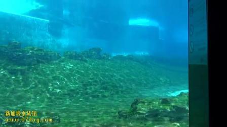 07day造景 新加坡水族馆