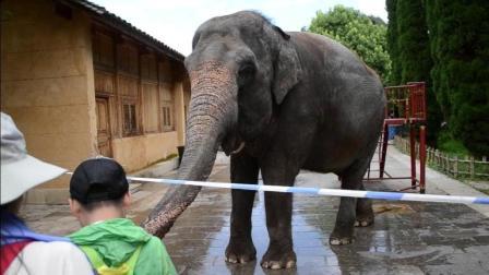 不要给大象喂饼干! 驯象师喝斥观众, 还给了大象鼻子一脚
